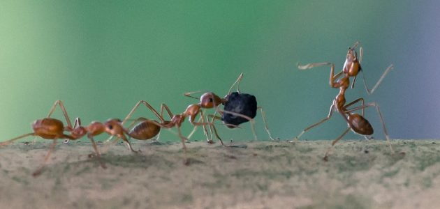 استمع إلى صوت النمل كما سجله العلماء.. هكذا تحدثت إلى سيدنا سليمان
