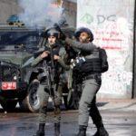 الجيش الإسرائيلي يقطع نحو 100 شجرة زيتون شمالي الضفة
