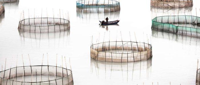 بالصور..غابات الخيزران المائية في الصين سحر من زمن الأساطير
