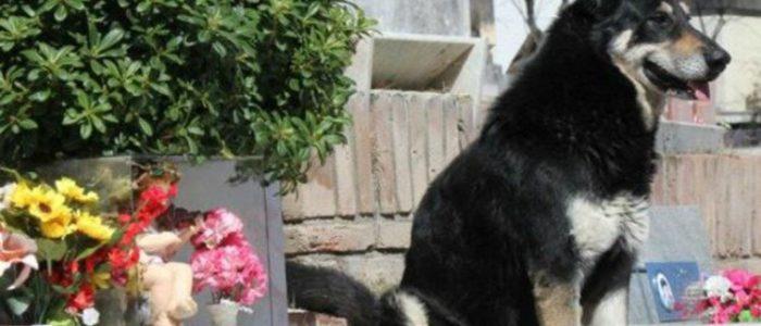 كلب وفي ظل 11 عاما بجوار قبر صاحبه حتي مات
