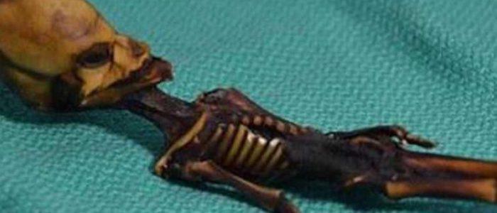 """كشف سر """"كائن فضائي محنط"""".. عثر عليه قبل سنوات بصحراء تشيلي"""