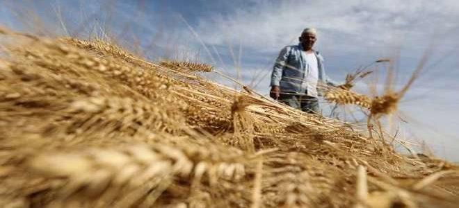 أمريكا: روسيا تحتل المركز الأول عالمياً بتصدير القمح للعام 2017-2018