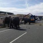 انقلاب شاحنة سيرك  بها أفيال في إسبانيا