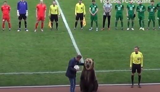 دب يبدأ مباراة كرة قدم في روسيا