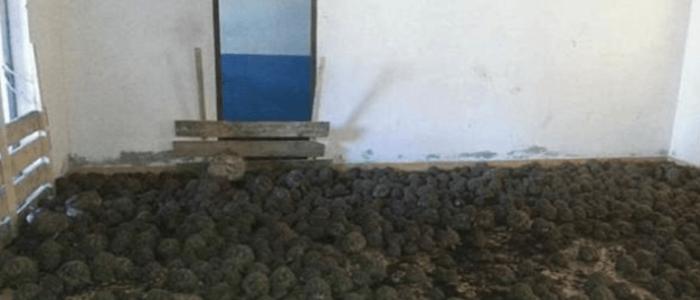 """10 آلاف سلحفاة """"نادرة"""" في منزل بمدغشقر"""