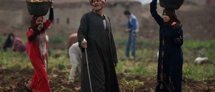 """مصر تفرض قانون يحظر بعض المحاصيل بسبب """"الفقر المائي"""""""