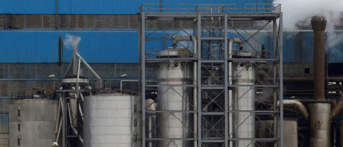 مصر تبني أكبر مصنع في الشرق الأسط لإنتاج زيوت الجوجوبا