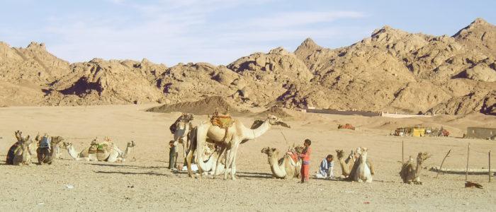 قبائل سيناء تتحد سوياً مرة أخرى
