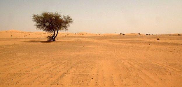 الجزائر تلقي بآلاف اللاجئين في قلب الصحراء ضمن حملة يمولها الاتحاد الأوروبي