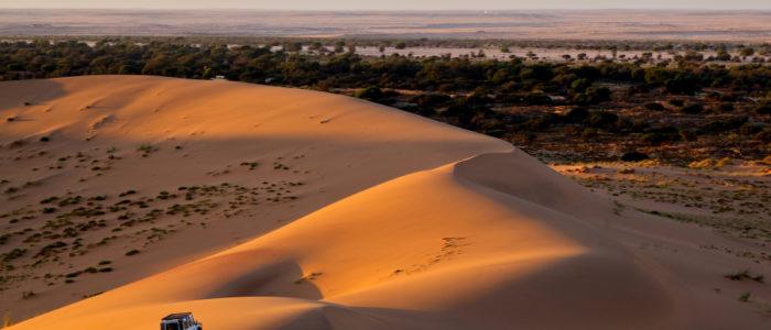 الصحراء تتحول إلى مزارع خضراء.. الصين تزرع الأرز في دبي باستخدام مياه البحر