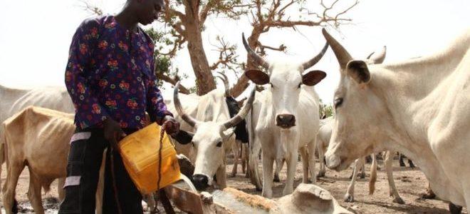 نزاع على الماشية يدفع نيجيريا إلى حافة حرب أهلية