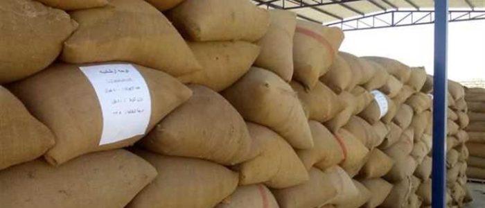 بلومبرج: مصر اعترضت على تعليق بنك هولندي تمويل شحنات القمح