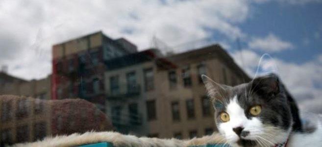 واشنطن تجري تعداد لإحصاء عدد القطط