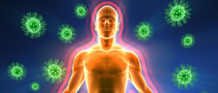 """العلماء يكتشفون جهازاً مناعياً مكوناً من """"أعضاء دقيقة"""" يتذكر كيفية مكافحة العدوى"""