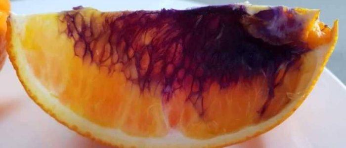 العلماء في حيرة لتجول البرتقال للون الأرجواني