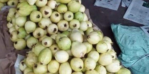 الزراعة تعلن رفع الحظر عن صادرات الجوافة المصرية إلى السعودية