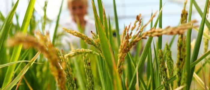 الصين تحدث ثورة في عالم الزراعة.. وداعاً للتربة