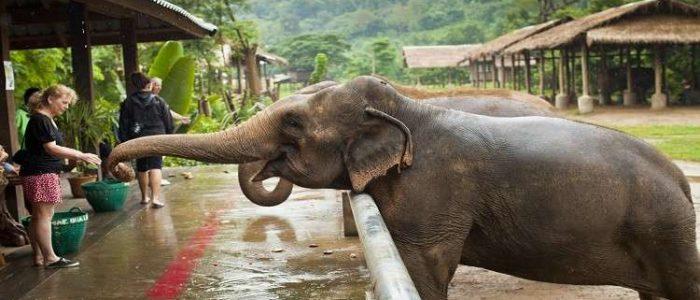 أول مستشفى للأفيال في العالم
