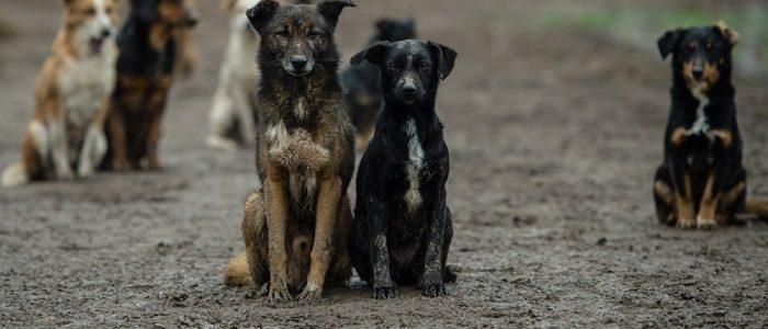 نالنائبة نادية هنري تطالب الحكومة بوقف تصدير كلاب وقطط الشوارع للخارج