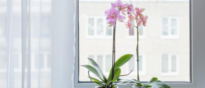 11 نبتة ستجعلك تشعر بالسعادة لو وضعتها في المنزل
