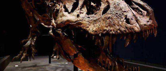 ما سبب انقراض الديناصورات؟