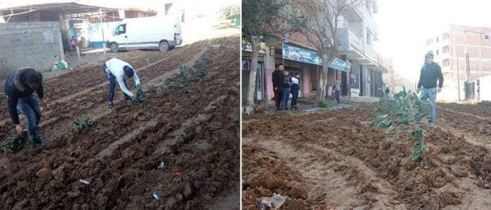 جزائريون يزرعون البصل والبطاطا في الشارع احتجاجا على وضع الطريق