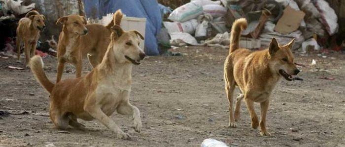 صينيون يذبحون كلبا بوحشية في مصر بغرض أكل لحمه