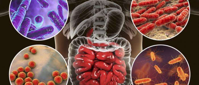 بكتيريا الأمعاء قد تكون السبب الرئيسي للسمنة
