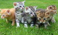 نيويورك تتبني قانوناً لمنع إزالة مخالب القطط
