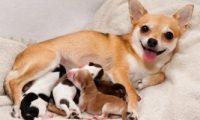المكسيك تنشئ أول مستشفى للحيوانات البرية فى أمريكا اللاتينية