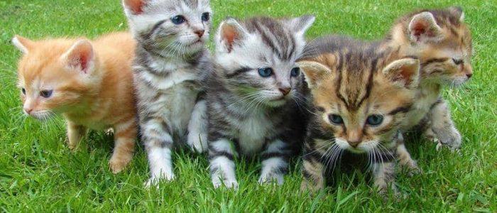 غضب عالمي لقتل أستراليا مليوني قطة