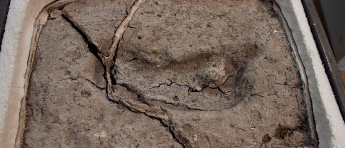 العثور على بصمة بشرية ترجع إلى 15.600 عام في أمريكا الجنوبية