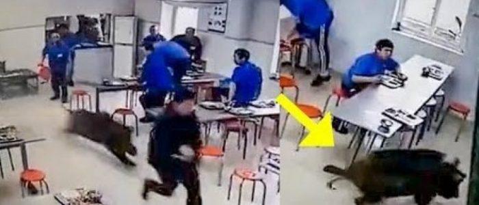 بالفيديو.. خنزير ضخم يقتحم مطعما صينيا ويرعب الزبائن