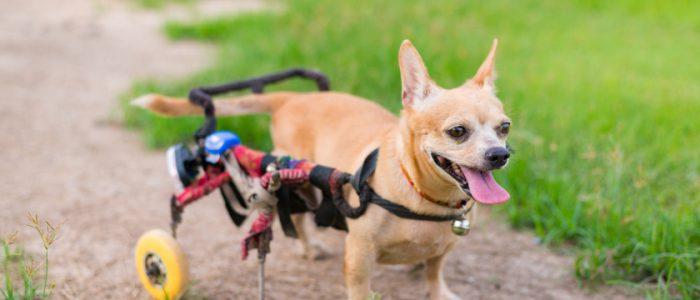 كلب مُعاق يُنقذ رضيعاً دفنته أمه المُراهقة حيّاً! خافت من والدها فلاحقها «الشروع في القتل»