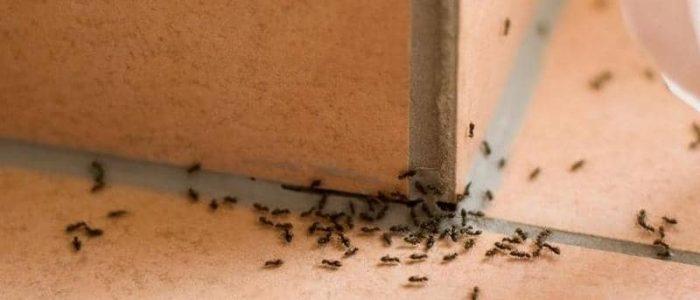 """العثور على مليون نملة من """"آكلة لحوم البشر"""" في مخبأ لتخزين الأسلحة النووية"""