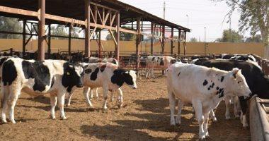 الجارديان: 60% من اللحوم لن تكون من الحيوانات المذبوحة بحلول 2040