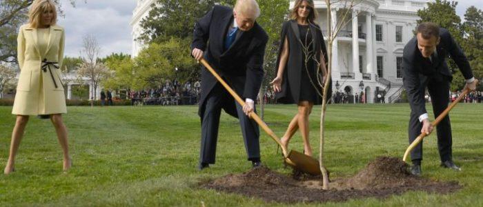 موت شجرة الصداقة التي أهداها ماكرون لترامب