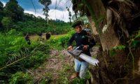 أشجار العود أغلي أشجار في العالم  الكيلوجرام بـ100 ألف دولار