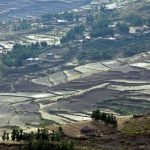 إثيوبيا تزرع 353 مليون شجرة في يوم واحد