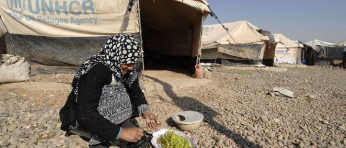العراق: عودة 423 نازحًا إلى مناطقهم في نينوى