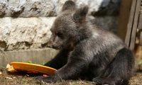 دبة يتيمة تجد المأوى في حديقة حيوان سراييفو