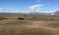 """52 حوتا في """"مأساة جماعية"""" على الشاطئ"""