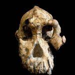 اكتشاف جمجمة عمرها 3.8 مليون عاما في إثيوبيا