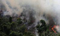 نتائج مأساوية لحرائق غابات الأمازون