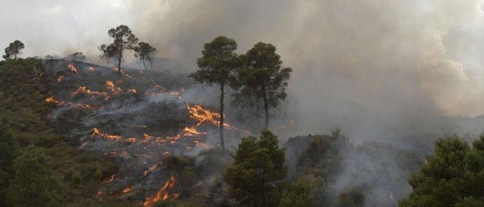 حرائق ضخمة تلتهم آلاف الأشجار المثمرة ومساحات واسعة من الأحراش في الجزائر