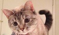 """القطة """"نالا"""" تربح 8 ألاف دولار عن كل بوست عبر حسابها على إنستجرام"""