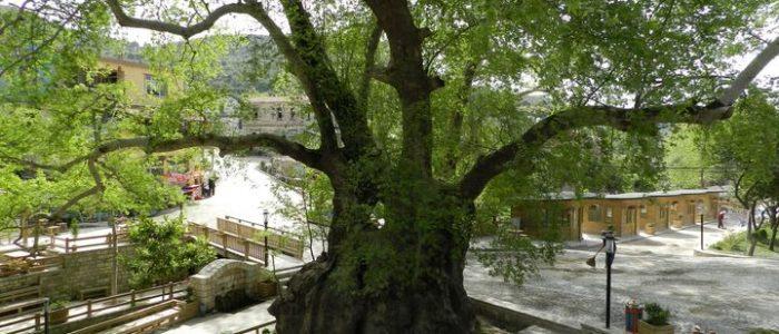 تعرف على أقدم 10 أشجار في الكوكب