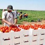 فلسطين ترفض تهديدات إسرائيل بوقف إدخال المنتجات الزراعية إلى أسواقها