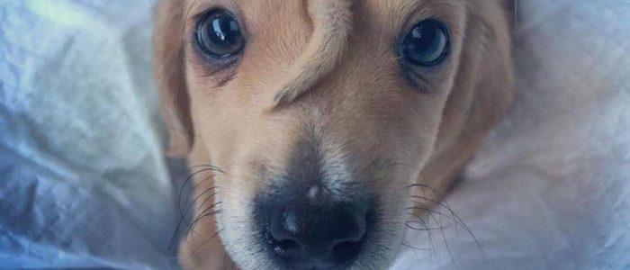 """كلب بـ""""ذيل"""" على وجهه"""