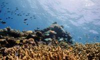 الاتحاد الدولي لحماية الطبيعة: تراجع الأكسجين في المناطق البحرية يهدد الأسماك